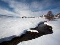 Из-под снега
