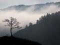 Одно в тумане