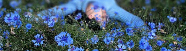 Сон в васильковом поле