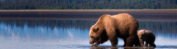 Наша Аляска (шамканье)