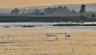 Аксаковский пруд. Лебеди