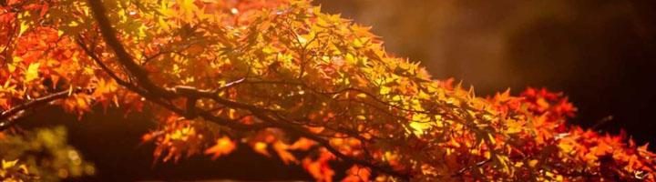 Осенённые Осенинами